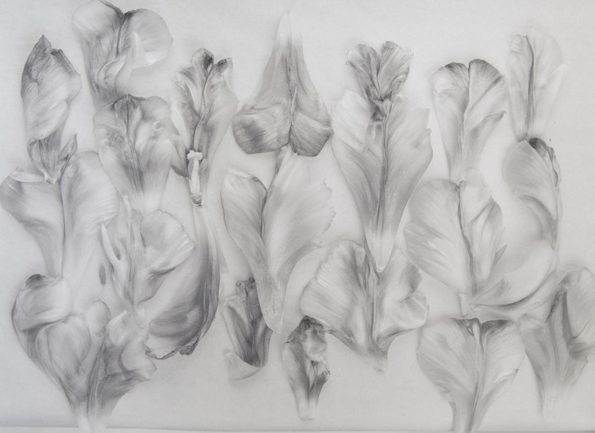 Tulipa, Garden of Earthly Delights, No. 1 (2004)